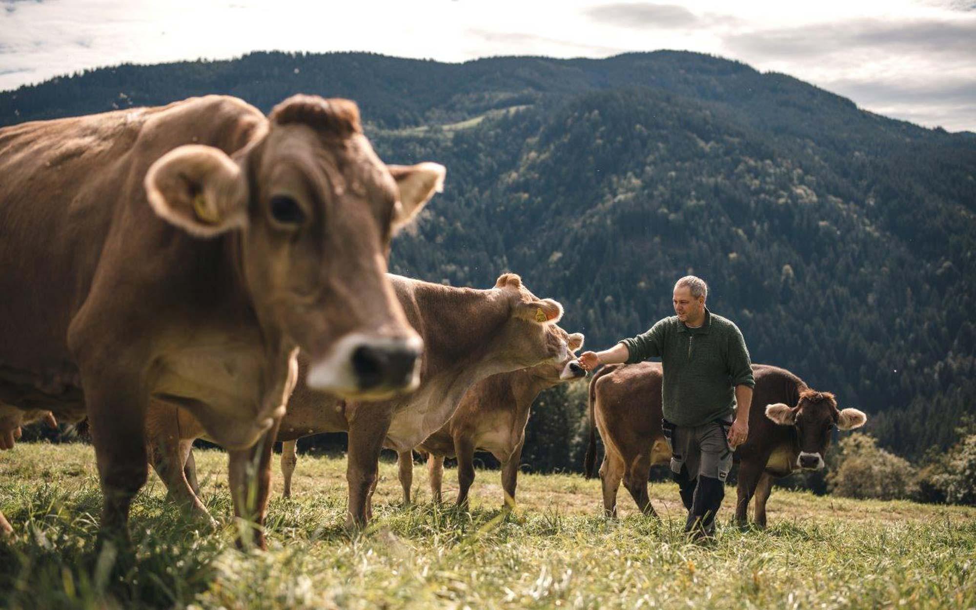 Ljubljanske mlekarne spodbujajo družbeno odgovornost med dobavitelji